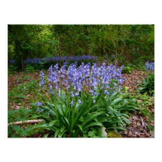 BLUEBELL WOOD ~ Poster # 8