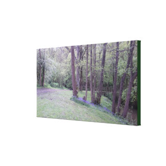 Bluebell Woodland Photo 236 Canvas Print