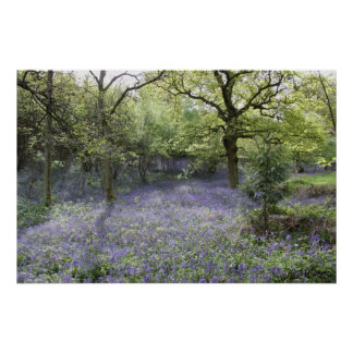 Bluebell Woods II Poster