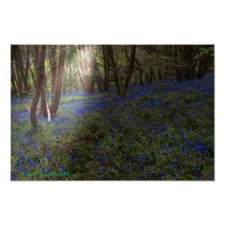 Bluebell Woods Postcard with Sunbeam Poster