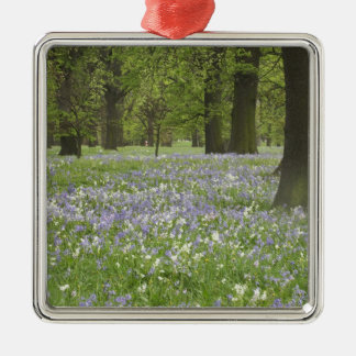 Bluebells and Oak Trees in Spring, Little Hagley Silver-Colored Square Decoration