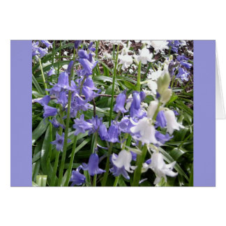 Bluebells x 3 Photo Card