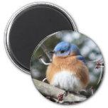 Bluebird 6 Cm Round Magnet