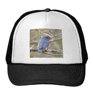 Bluebird Backside Cap