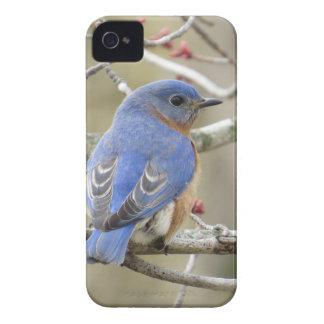 Bluebird Backside iPhone 4 Cover