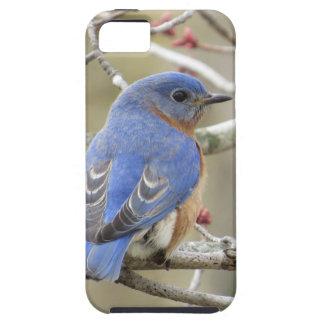 Bluebird Backside Tough iPhone 5 Case