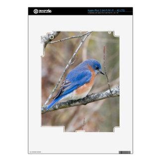 Bluebird Blue Bird in Tree iPad 3 Skin