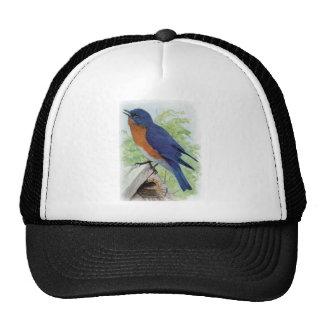 Bluebird Mesh Hats
