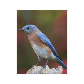 Bluebird Fine Art Canvas Print