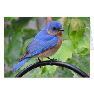 Bluebird Greeting Card, Blank Inside Card