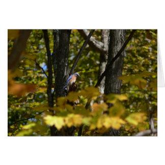 Bluebird in the Sun Card