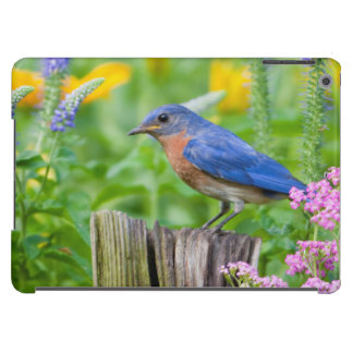 Bluebird male on fence post in flower garden iPad air cover