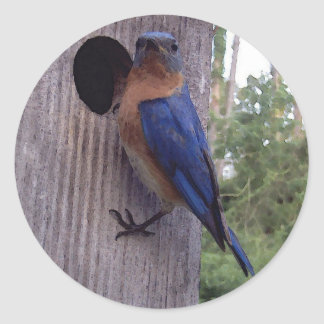 Bluebird Male Sticker