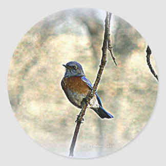 Bluebird of Happiness Classic Round Sticker
