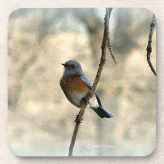 Bluebird of Happiness Coasters