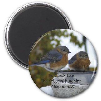 Bluebird of Happiness Comical Magnet