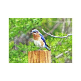 Bluebird on a Fence Post Canvas Print