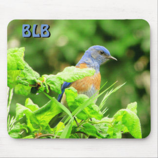 Bluebird on Corkscrew Bush  your Initials Mouse Pad