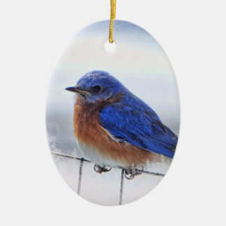 Bluebird oval ornament