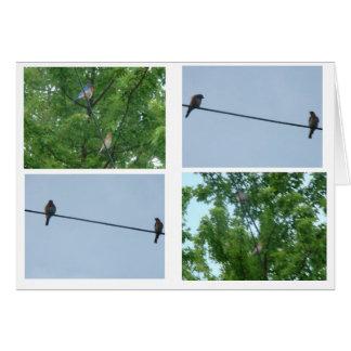 Bluebird Pair, Collage Card