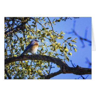 Bluebird Under The Mistletoe Greeting Card