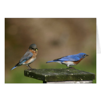 Bluebirds Card