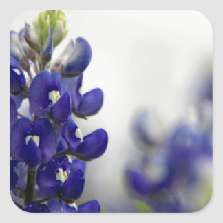 bluebonnet blue square sticker