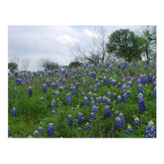 Bluebonnet Hill Postcard