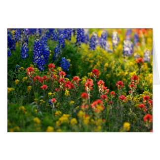 Bluebonnet Landscapes Card