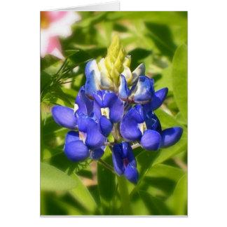 Bluebonnet of Texas Card