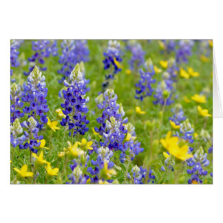 Bluebonnet Spring Card