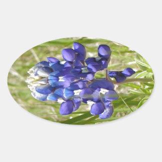 Bluebonnet Oval Sticker