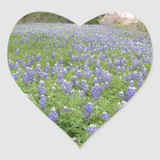 Bluebonnets Field.jpg Heart Sticker