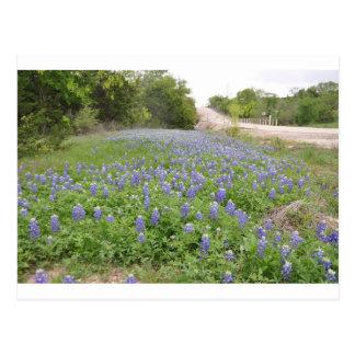 Bluebonnets Field.jpg Postcard