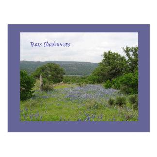 Bluebonnets in Texas Postcard