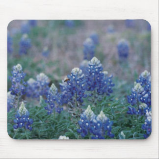 Bluebonnets Mouse Pad
