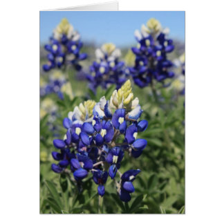 Bluebonnets Note Card