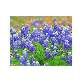 Bluebonnets of Spring Canvas Print