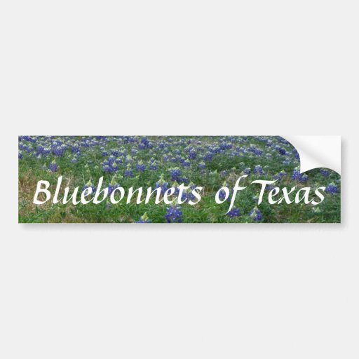 Bluebonnets of Texas Bumper Stickers