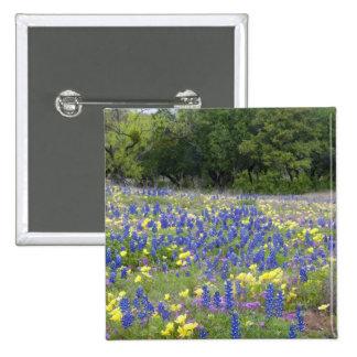 Bluebonnets primrose and phlox pins