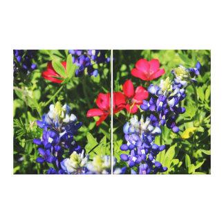 Bluebonnets Stretched Canvas Prints