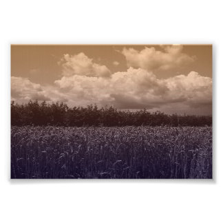 Bluecorn Blues Photo Print
