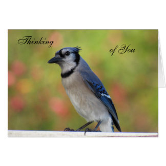 Bluejay Thinking of You Greeting Card