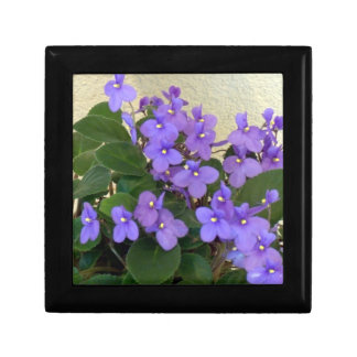 Bluest Blue Violets Small Square Gift Box