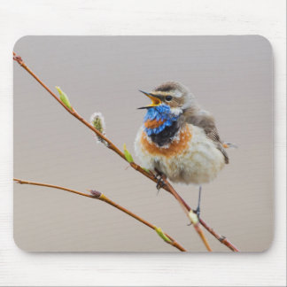Bluethroat Singing Mouse Pad