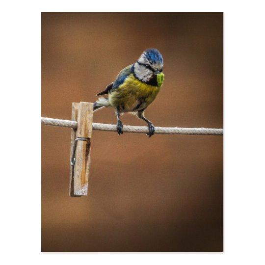 Bluetit on a Washing Line Postcard