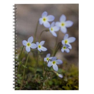 Bluets Little Purple Flowers Wildflower Notebook