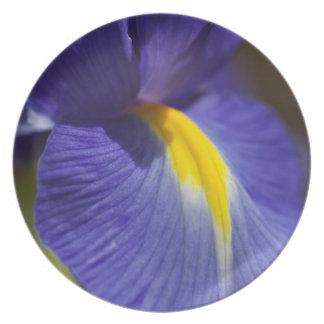 Blur Iris Plate