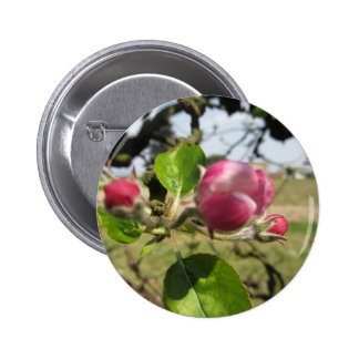 Blurred apple flower closed buds in spring 6 cm round badge