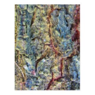 Blurred fruit tree bark texture background postcard